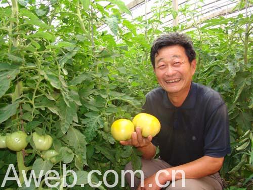 图为太空蔬菜育种基地工作人员向记者展示刚刚采摘下来的果实.
